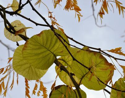 Park Tenbosch in Autumn