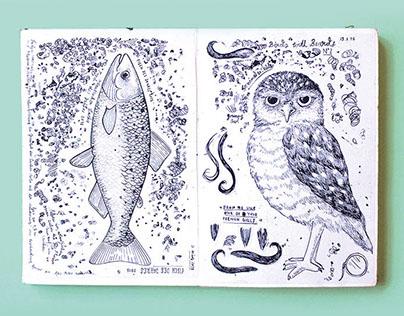 CARRIER BIRD'S SKETCHBOOKFRIDAY
