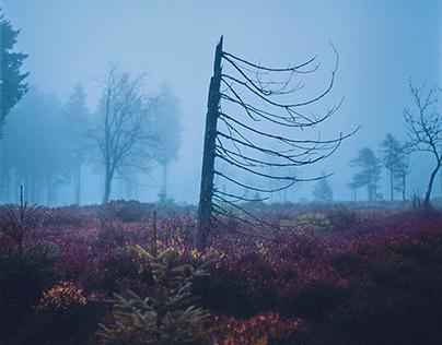 Blue Fog - Thuringia, Germany