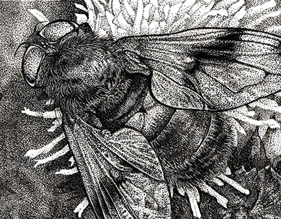 Hoverfly Study