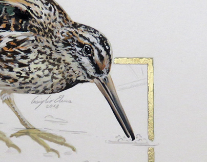 Birds Illustrations with gold leaf