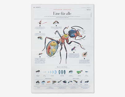 Anatomy and Life of an Ant