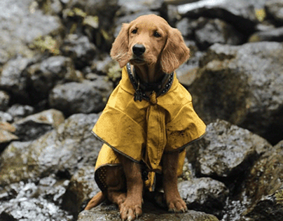 THE yellow raincoat