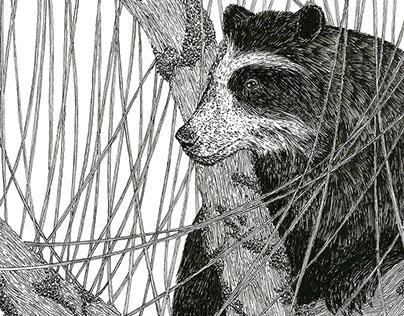 Fauna Colombiana | Vulnerable Animal Illustration