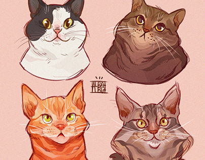 🐱🦊 All my cats 💕