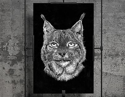 Lynx - Scratchboard Drawing
