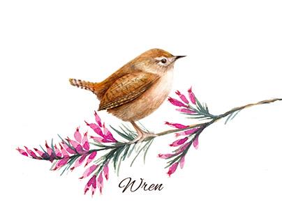 Teeny Tiny Wren Watercolour Painting