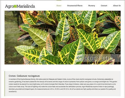 Website Design: Agro Marialinda
