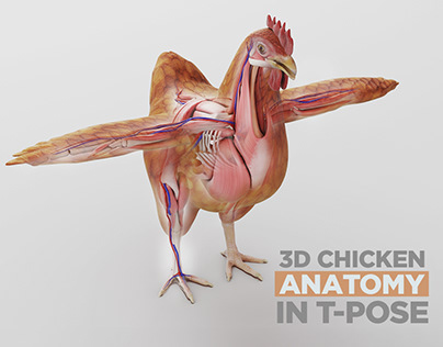 Chicken anatomy in T-pose for rigging
