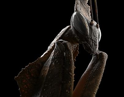 Ghost Mantis WIP2