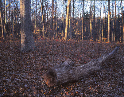 Closeup Views of Undergrowth