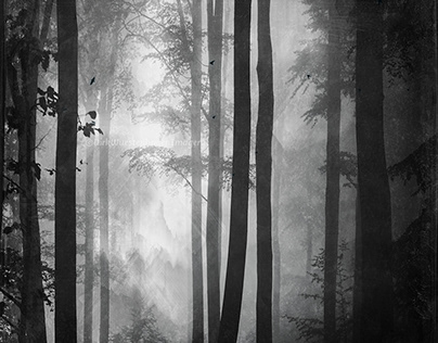 Summer Forest in Black and White