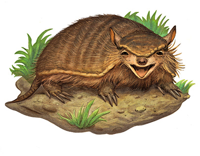 The Screaming Hairy Armadillo Book