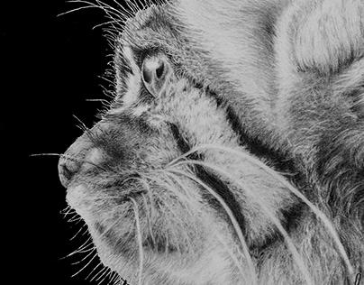 Mixed media - Manul (Pallas cat)