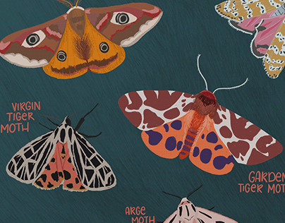 Moth Illustrations