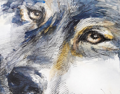 watercolor poster / wolf / traditional art technic