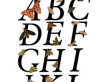 ABC's of Moths | Stratford Butterfly Farm