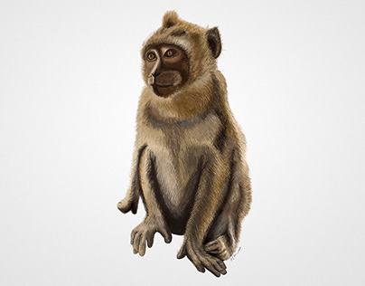 Monkey Digital Illustration