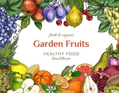 Garden fruits. Vector illustrations.