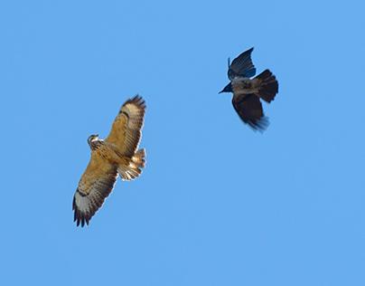 Forskellige fugle
