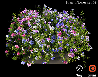 Plant Flower set 04