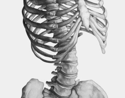 Skeletal Torso Rendering