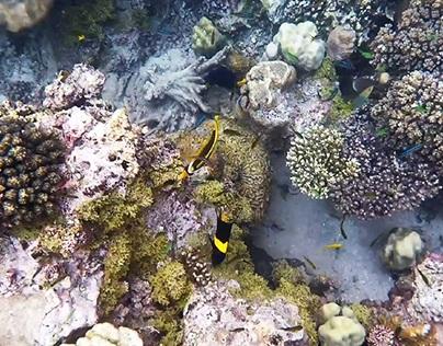 Unterwasser - Video
