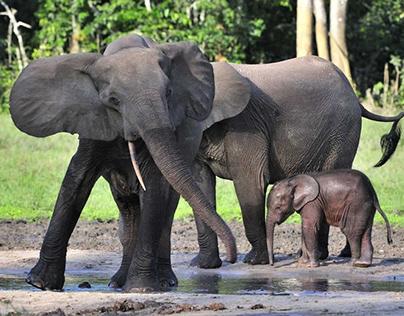 Écosystème africain