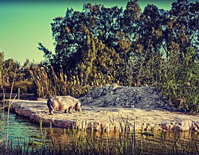 Africano Park