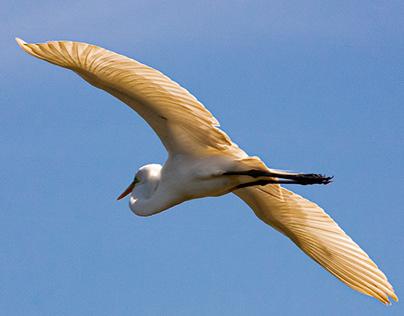 Nesting at High Island, TX