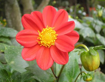floralessence