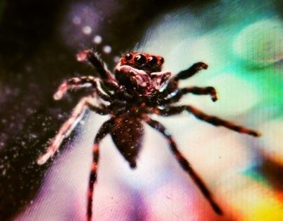 Spider Superstar
