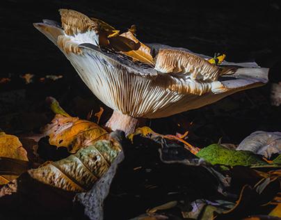 Last mushrooms in our backyard