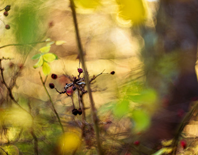 Berries - light mood in late autumn