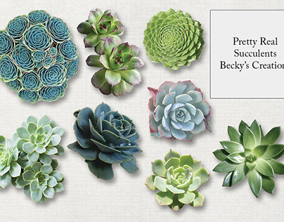 Real Extracted Succulent Images