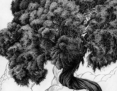 Juniper 2 - Tree 4