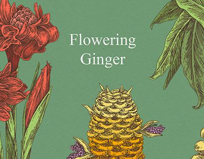 Flowering ginger