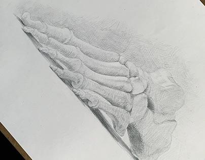 Human Foot Bones Anatomy