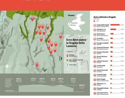 Fragola Irma an infographic