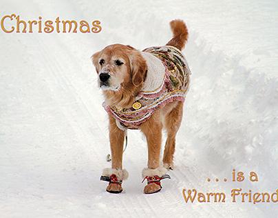 Christmas and Holiday Card Designs