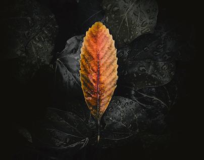 Adobe Lightroom CC 2018 identity artwork