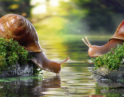 Snails in the forest