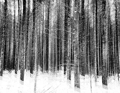 Sticks of Frozen Winter