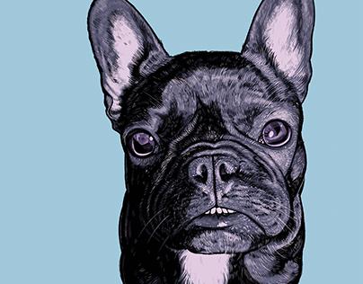 Stella the French Bulldog