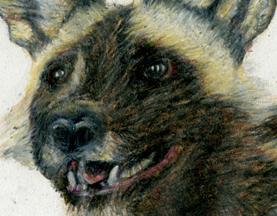 African Wild Dogs Drawing
