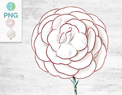 Carnation Realistic Vintage Flower Clipart