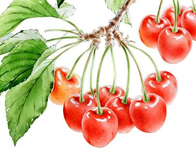 Watercolour Cherry