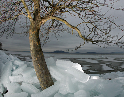 Ice, tree, Balaton
