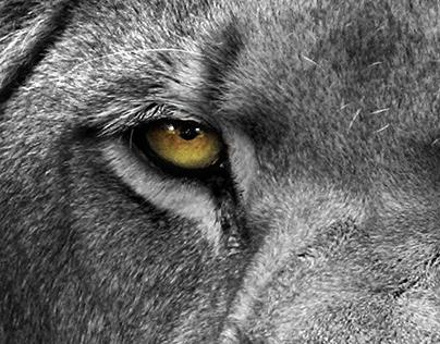 Irresistible LION
