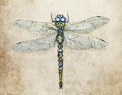 Dragonfly on the old paper A3